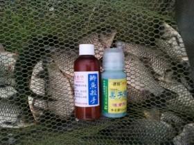 钓鱼饵料味道要及时调整