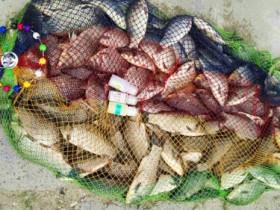 春季钓鱼饵料要有选择性