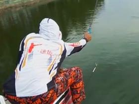 钓鲤鱼饵料窝料有视频