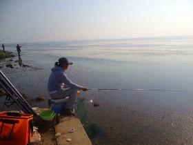 夏季浮钓鲫鱼的饵料搭配