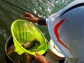 钓鱼抄网的重要性