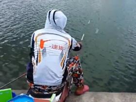 速抜战队周六浮钓鲤鱼