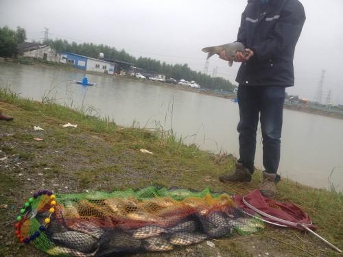西渡蒲秀钓场放鱼