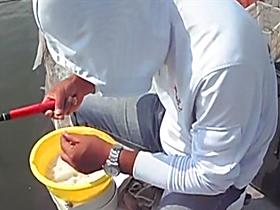 速拔哥搓米饭钓滑口鲤鱼