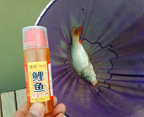 春季钓鲤鱼技巧