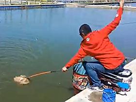 快速拔鱼钓鲤鱼