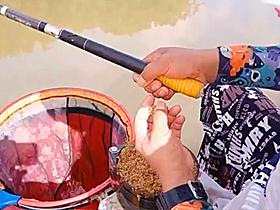 钓黑坑鱼口不好味道加大上鱼快