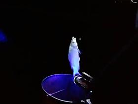 速拔哥夜钓鲫鱼小药加的多视频