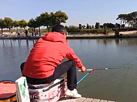 速拔哥黑坑浮钓鲤鱼上鱼就是快