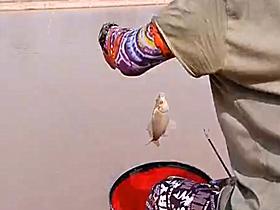 速拔哥钓鲫鱼打浮行程连杆上鱼