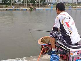 钓鲤鱼打浮要看鱼情的变化